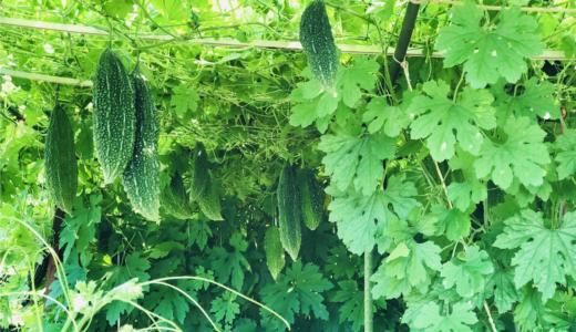 無農薬畑で家庭菜園!旬なお野菜を旬な時期にそのまま食べる幸せ